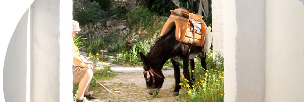 Donkeys Carry the Burden on Hydra