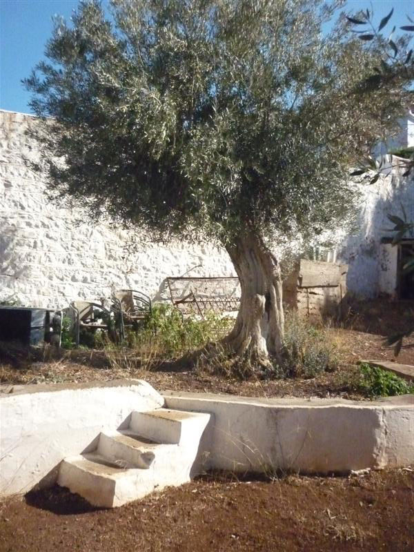 A traditional house situated in Kamini with a spacious garden planted with olive, almond and lemon trees.